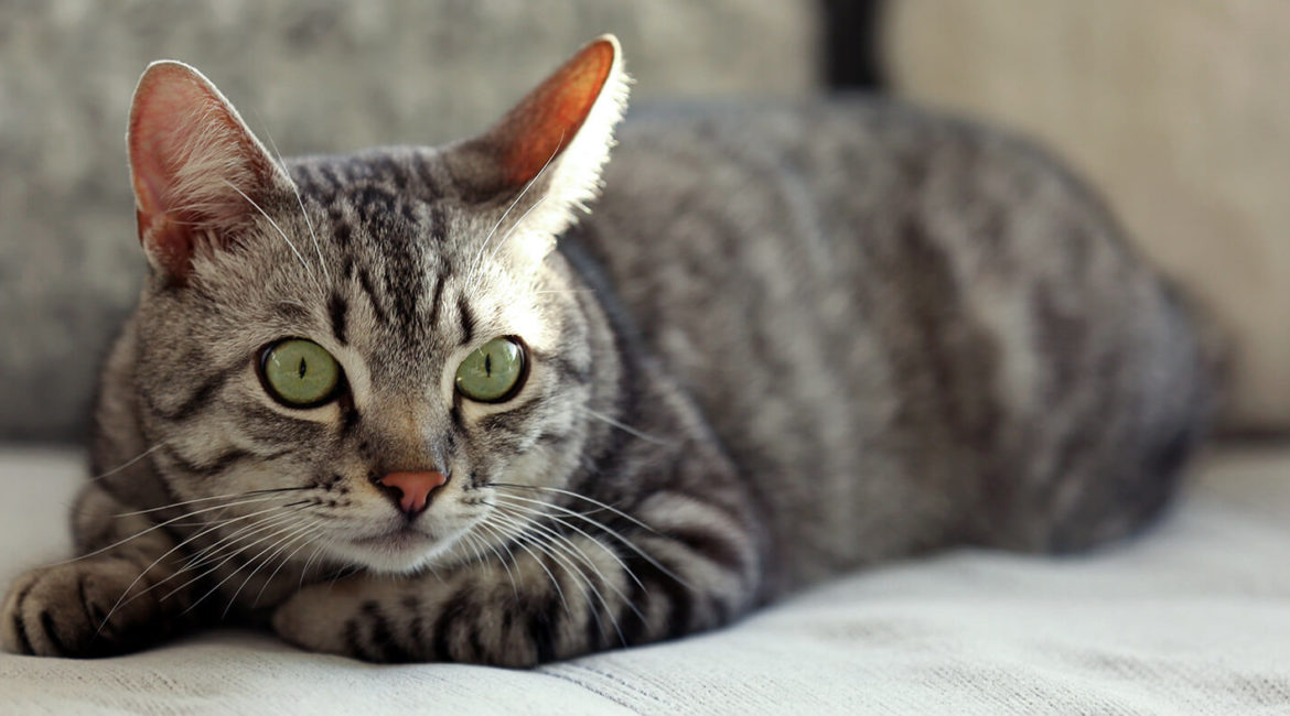 5 Shortcut Blunders That Can Lead to Disaster for Your Cat
